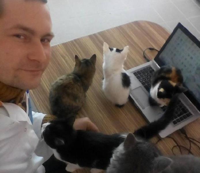 Готель для котів