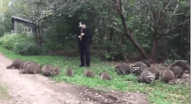 Кумедневідео: американець влаштував концерт для єнотів (ВІДЕО)