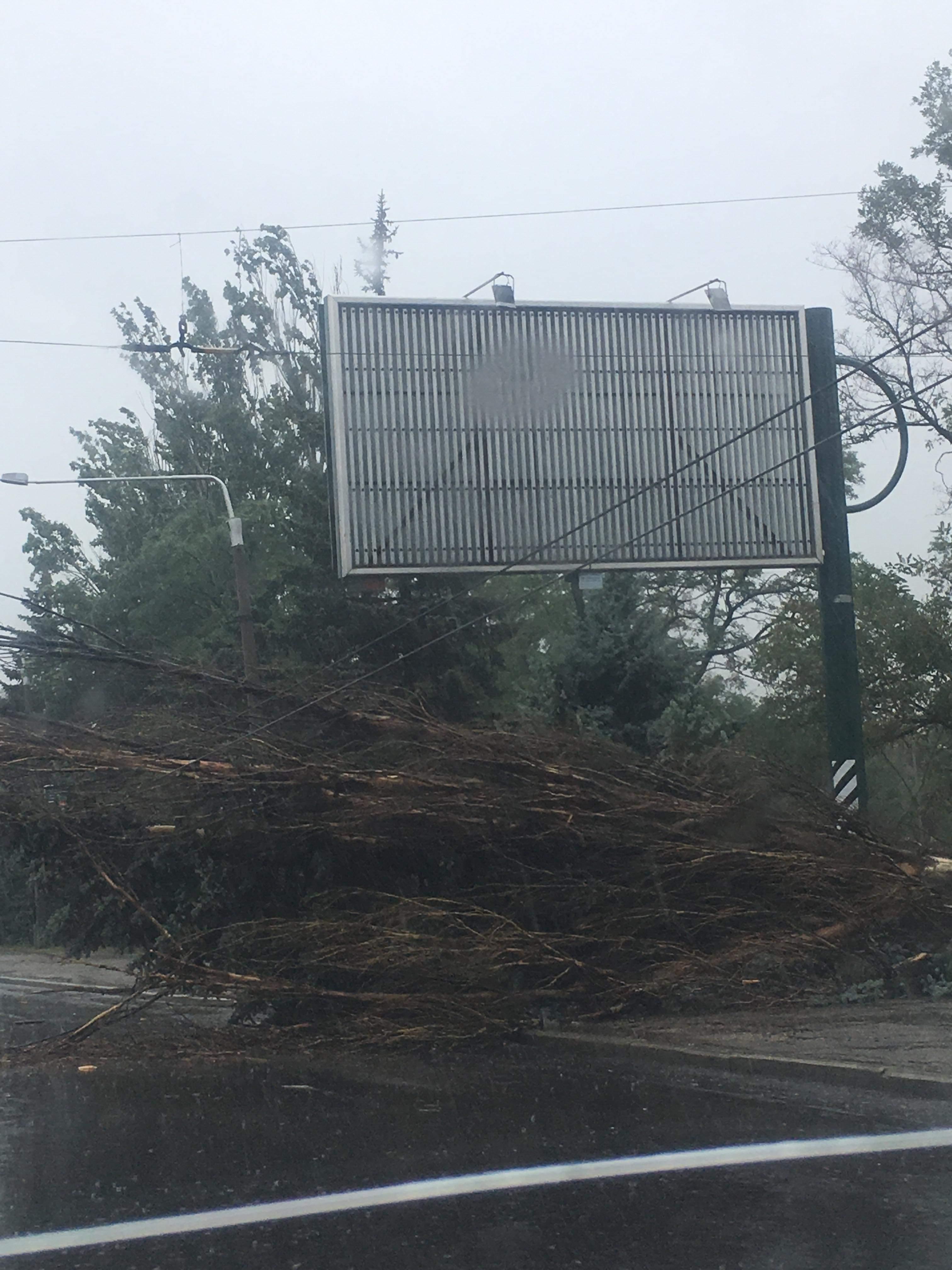 Негода в Запоріжжі: на центральному проспекті дерево впало прямо на проїжджу частину