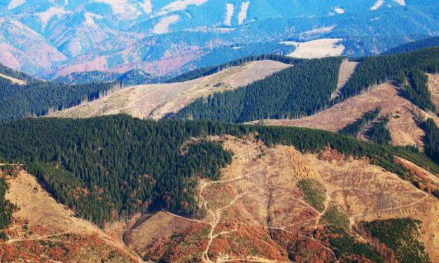 """Прийнятий """"слугами"""" Закон про заборону вирубки лісів насправді її дозволяє – екологи"""