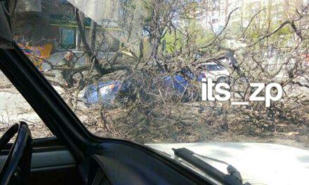 У Запоріжжі дерево впало прямо на проїжджаючий проспектом автомобіль