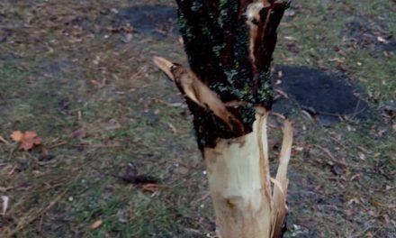 У Запоріжжі в парку нелюди познущалися над деревами – фото