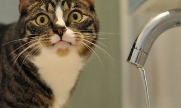 У Запоріжжі за рядом адрес на добу відключать воду